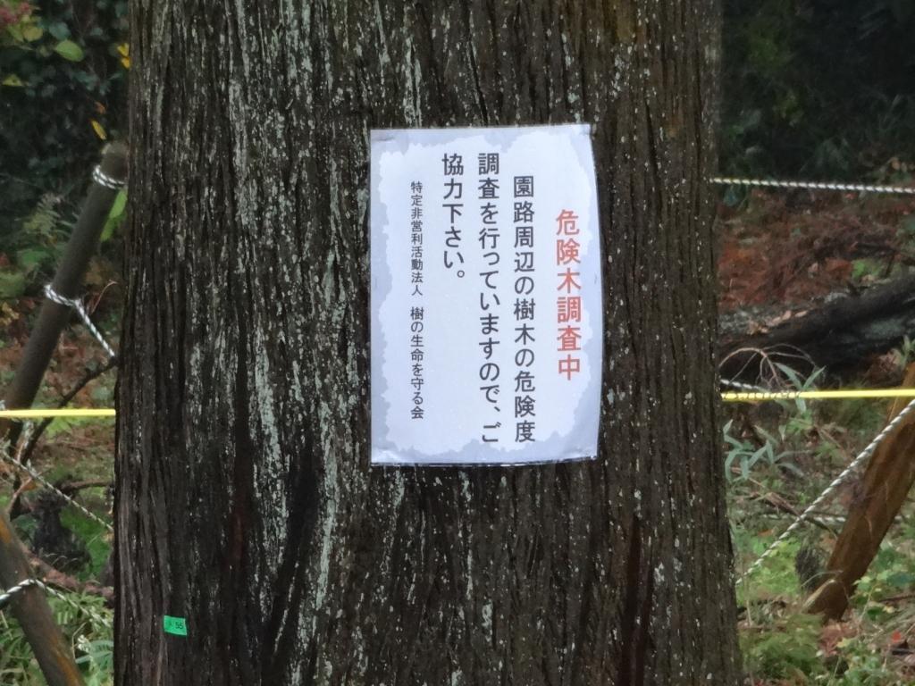 20171114危険木調査