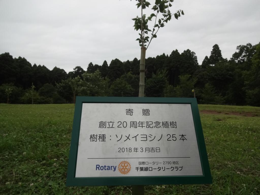 20180610桜植樹