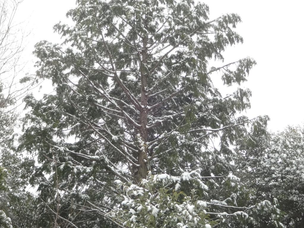 20190209雪