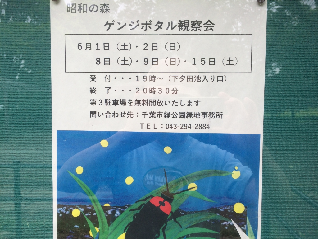 20190601ホタル観察会