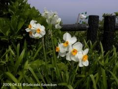 きら☆ら星広場の春