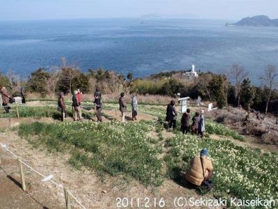 水仙と見物客