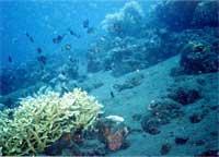 写真:タイトルで使っている海の中の写真です(撮影by堀木)