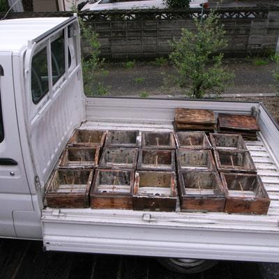 ニホンミツバチの蜂蜜 重箱