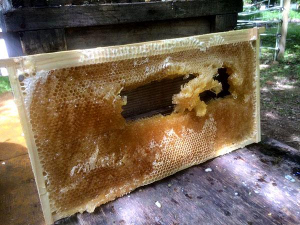 分離機でまわしたら壊れてしまいました。ハチミツいっぱい過ぎ。