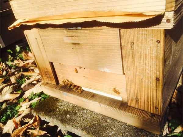 ミツバチの巣箱 冬仕様