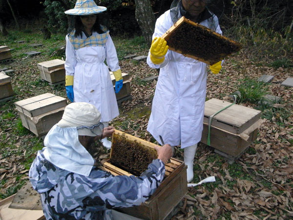 和歌山で過ごすミツバチ