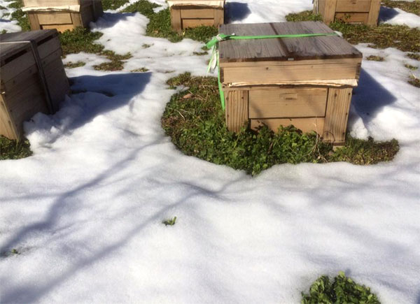 雪で囲まれたミツバチの巣箱