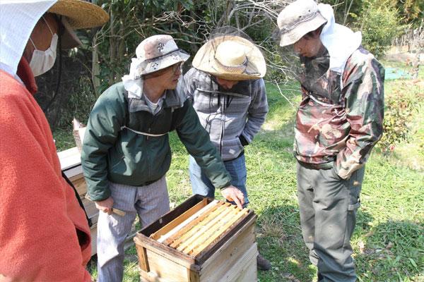 ミツバチの巣箱を開けて見学