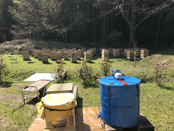 初回採蜜の準備