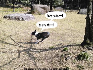 2009/03/18/dog01