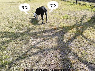2009/03/18/dog02