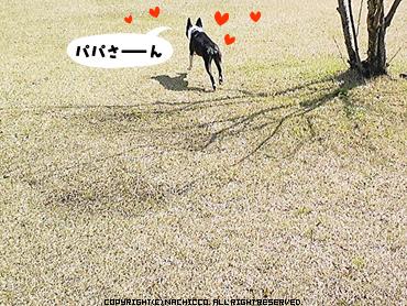 2009/03/18/dog04