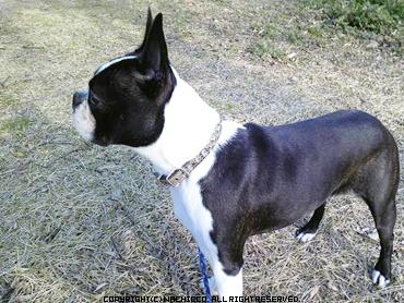 2009/03/15/dog