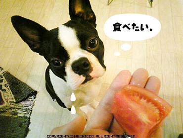 2009/04/13/dog03