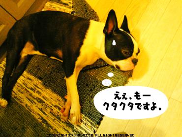 2009/04/11/dog