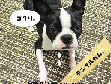 2009/04/15/dog