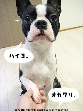2009/04/17/dog
