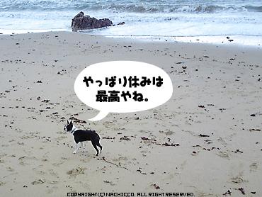 2009/04/26/dog1