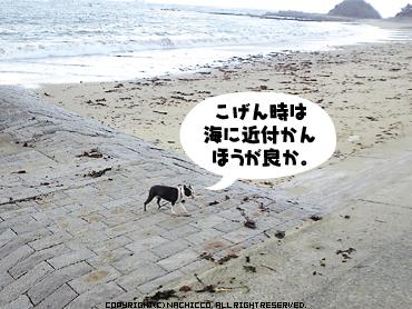 2009/04/26/dog2