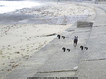 2009/04/26/dog3