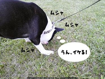 2009/04/26/dog4
