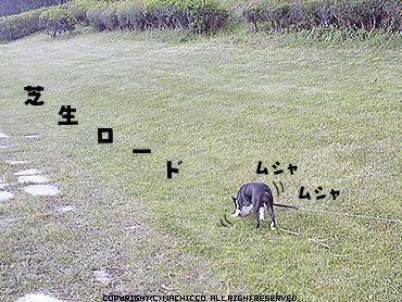 2009/04/26/dog5
