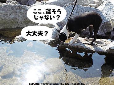 2009/04/29/dog3