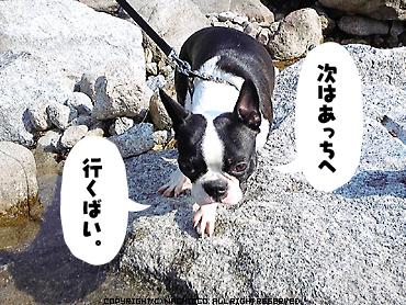 2009/04/29/dog4