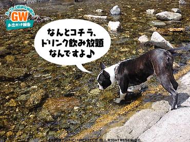 2009/05/02/dog3