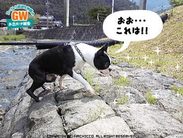 2009/05/02/dog5