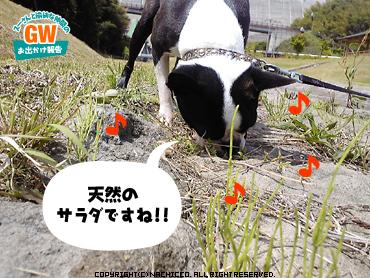 2009/05/02/dog6