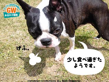 2009/05/02/dog7