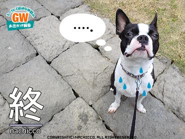 2009/05/02/dog10