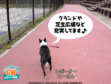 2009/05/03/dog3