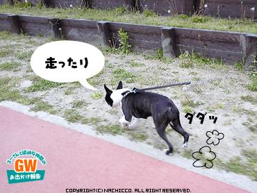 2009/05/03/dog4