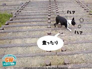 2009/05/03/dog5