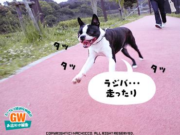 2009/05/03/dog6