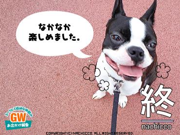 2009/05/03/dog7