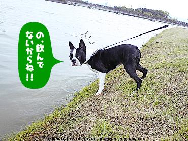 2009/05/17/dog1