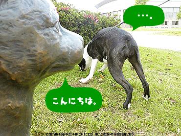 2009/05/17/dog3