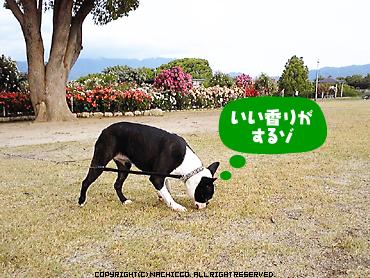 2009/05/17/dog4