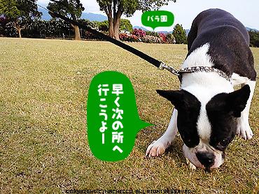 2009/05/17/dog7