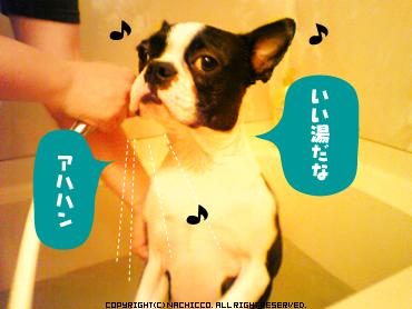 2009/05/19/dog1