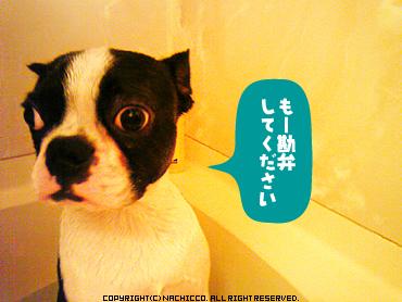 2009/05/19/dog2