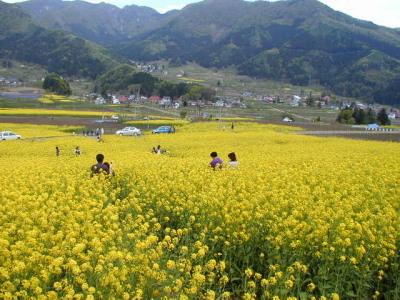 春の菜の花公園.jpg