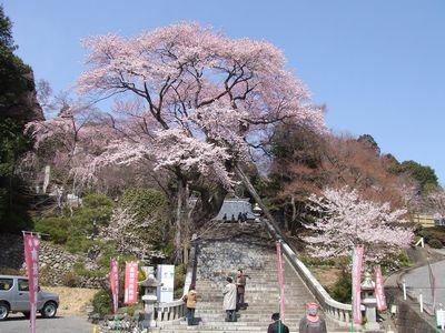 慈光寺の桜(2006年3月31日撮影)