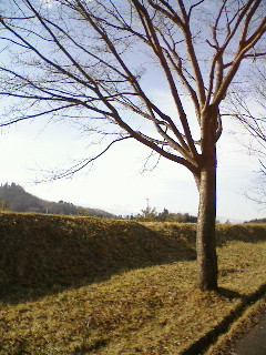 20060210_91535.jpg