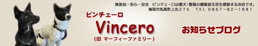 ビンチェーロお知らせブログ
