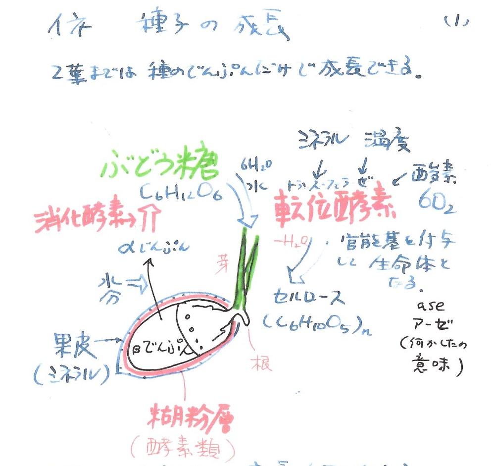 2.5葉までの種子